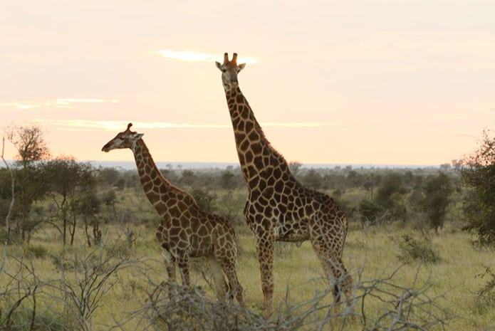 Morning-Kruger-Park-Safaris-2