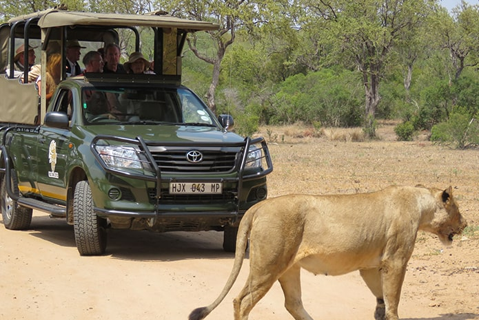 Kruger Park Private Vehicle Full Day Safaris