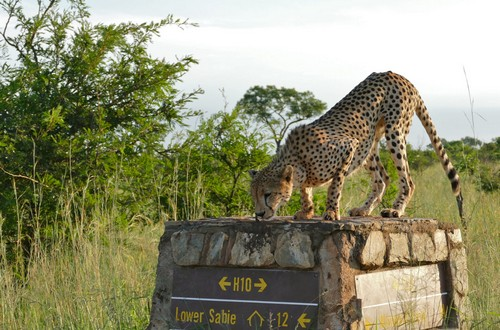 Lower sabie kruger park