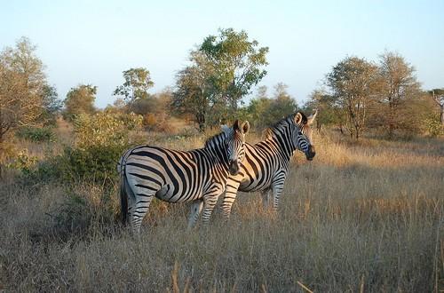 safari kruger park prices