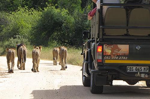 park safari packages