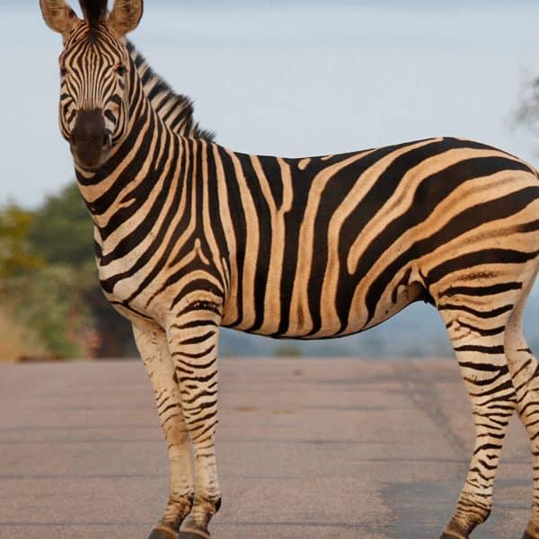 5-day-safari