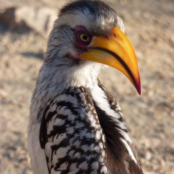 birding kruger park