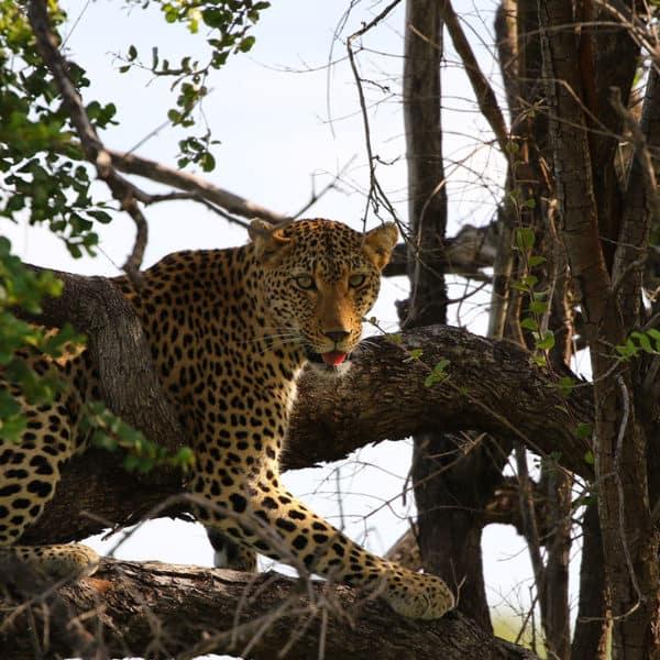 safari trips from johannesburg
