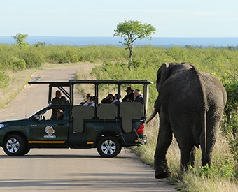 Kruger park day safaris