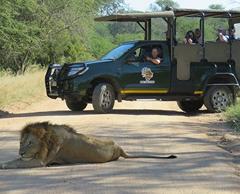 Kruger day safaris