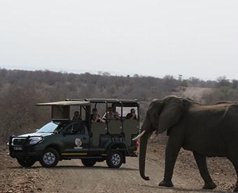 Kruger tours
