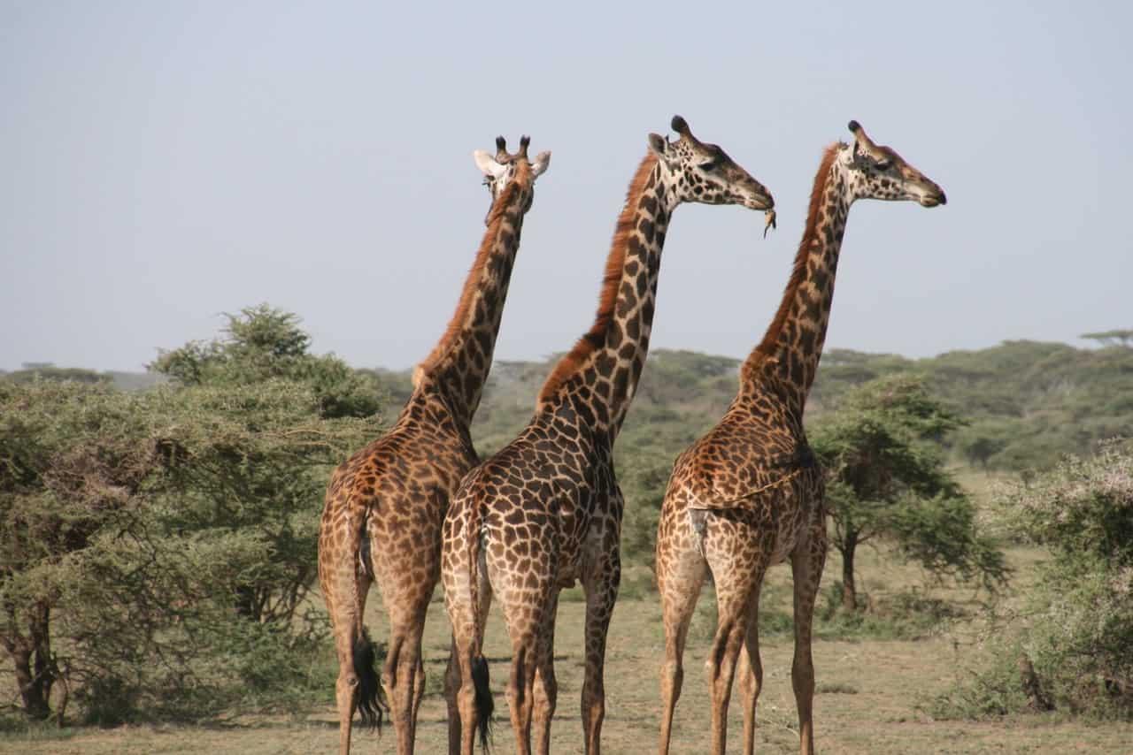 half day safari kruger national park