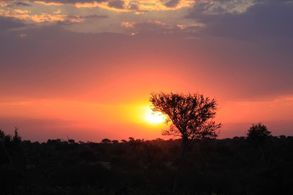 Morning Kruger safari