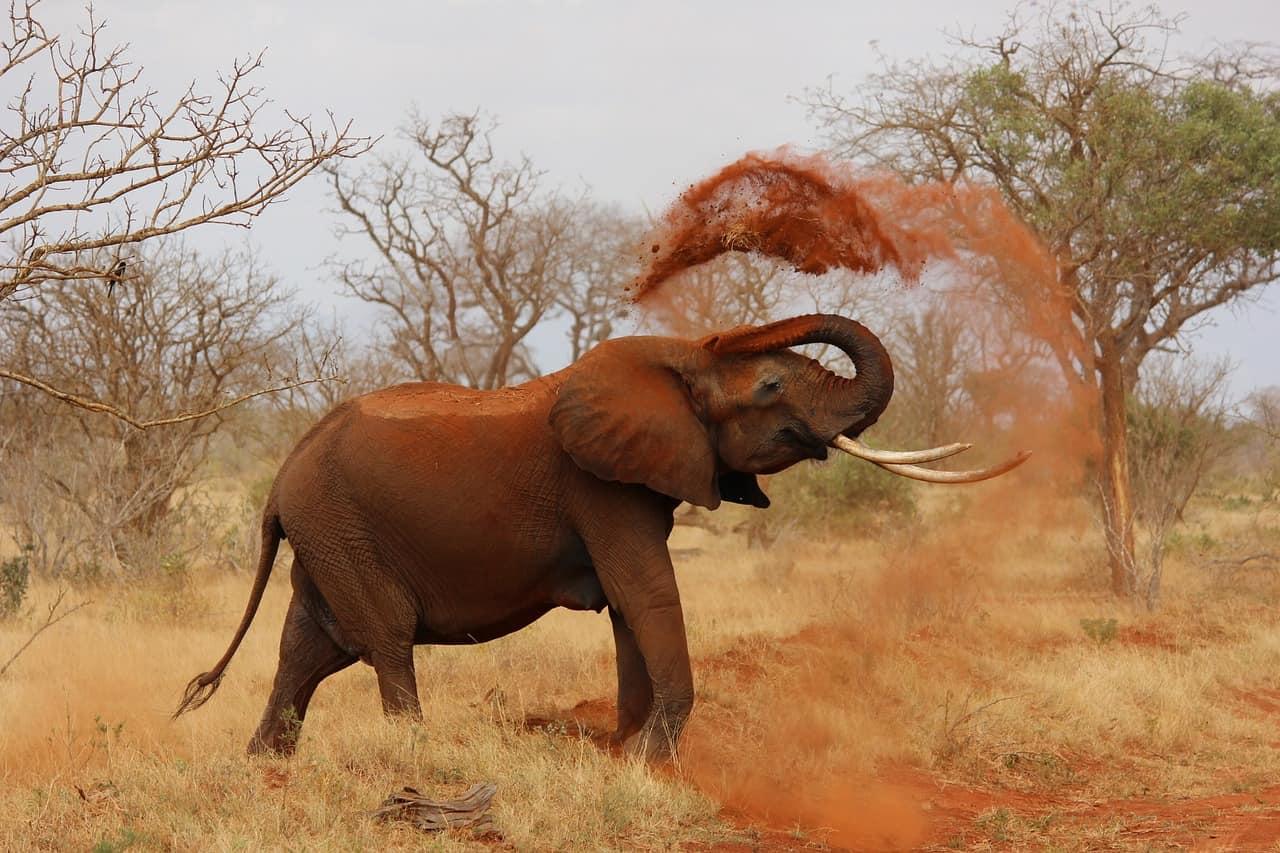 Elepant-Kruger-National-Park-Drives