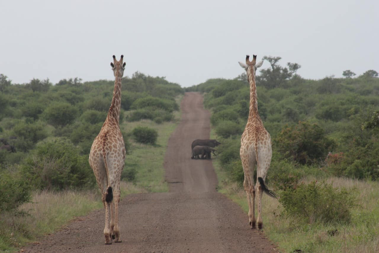 Kruger National Park Open vehicle Drives