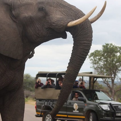 kruger day trips