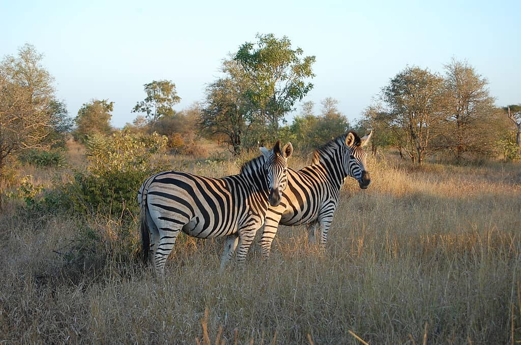 Kruger-National-Park-safaris