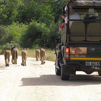 Kruger Park Open vehicle drives