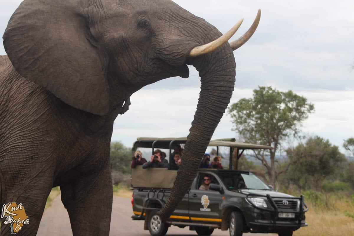 Kruger-Park-Safaris-16