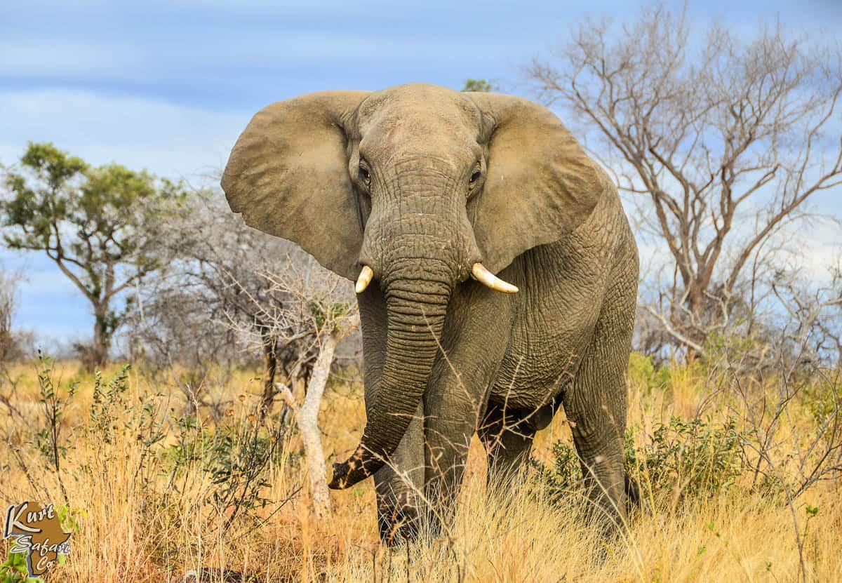 Kruger-Park-Safaris-22