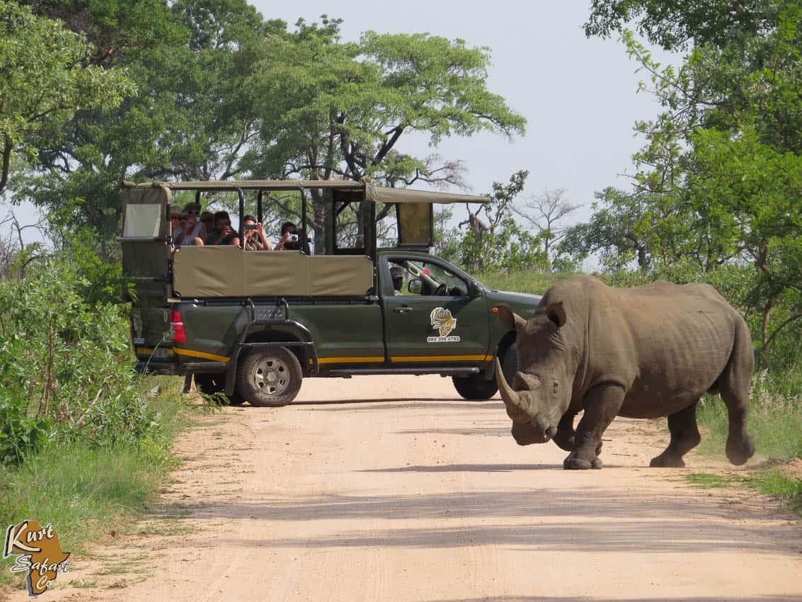 Full day Kruger park safari