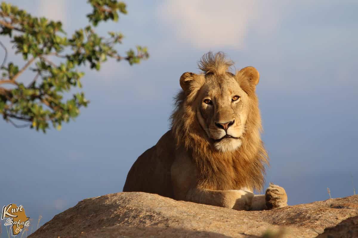 Kruger-Park-Safaris-39