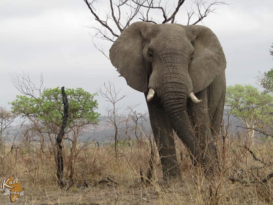 Kruger-Park-Safaris-55