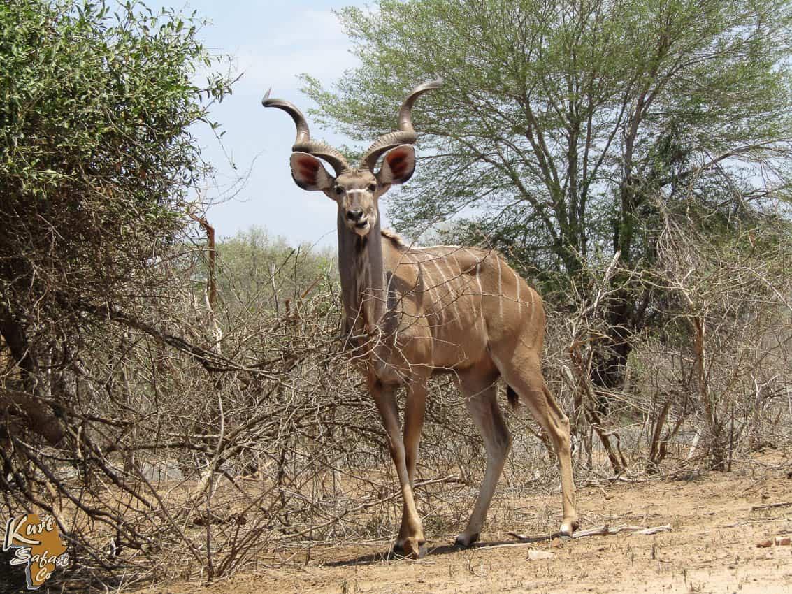 Kruger-Park-Safaris-57