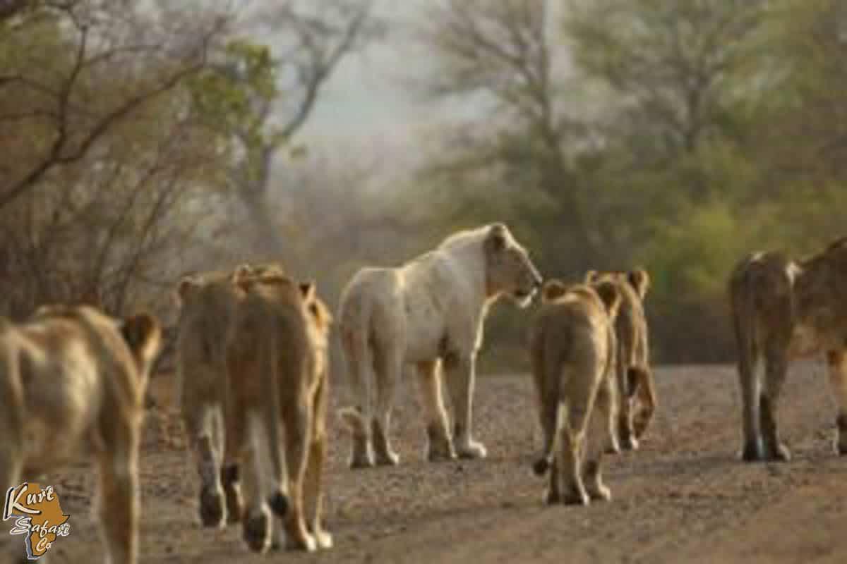 Kruger-Park-Safaris-64