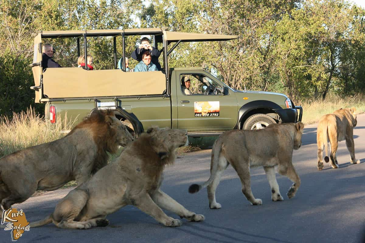 Kruger day Safari