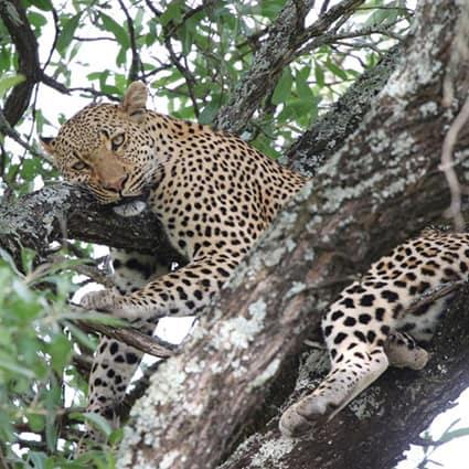 Kruger-Park-Safaris