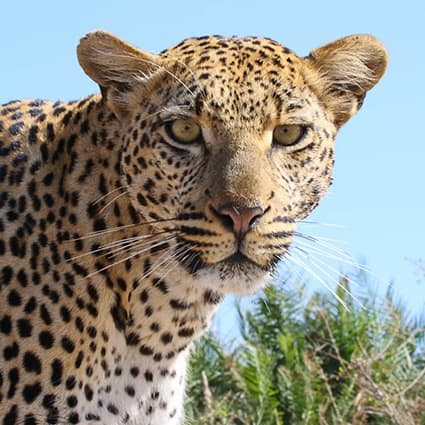 Kruger-Photographic-Safaris