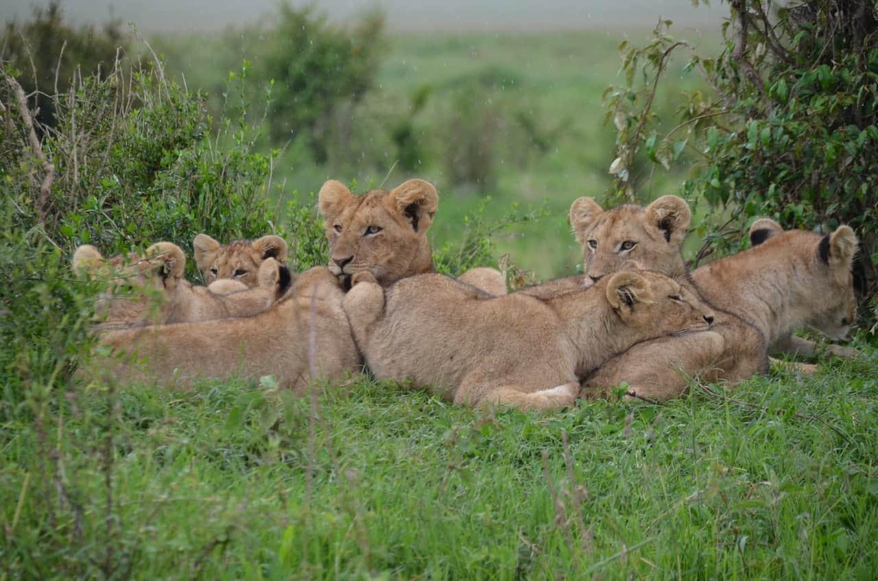 Kruger national park guided safaris