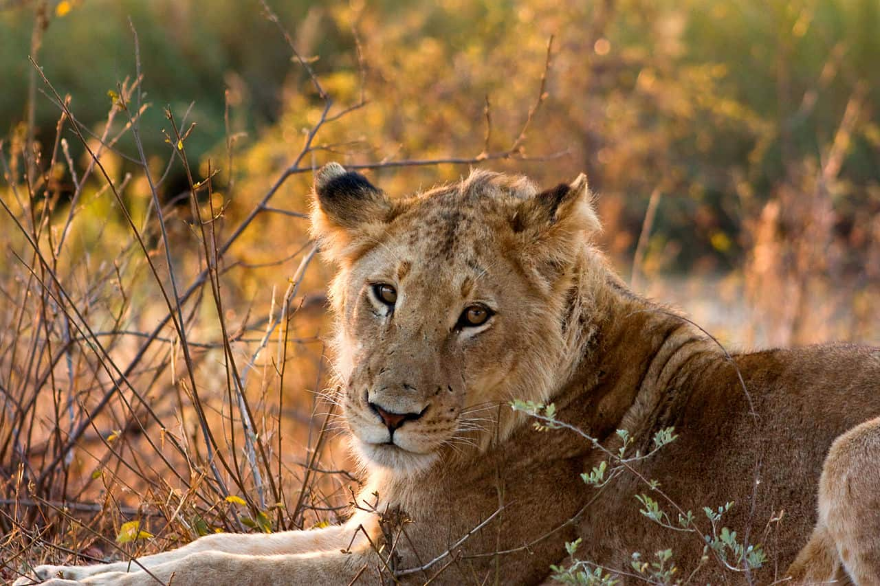 kruger national park day trips