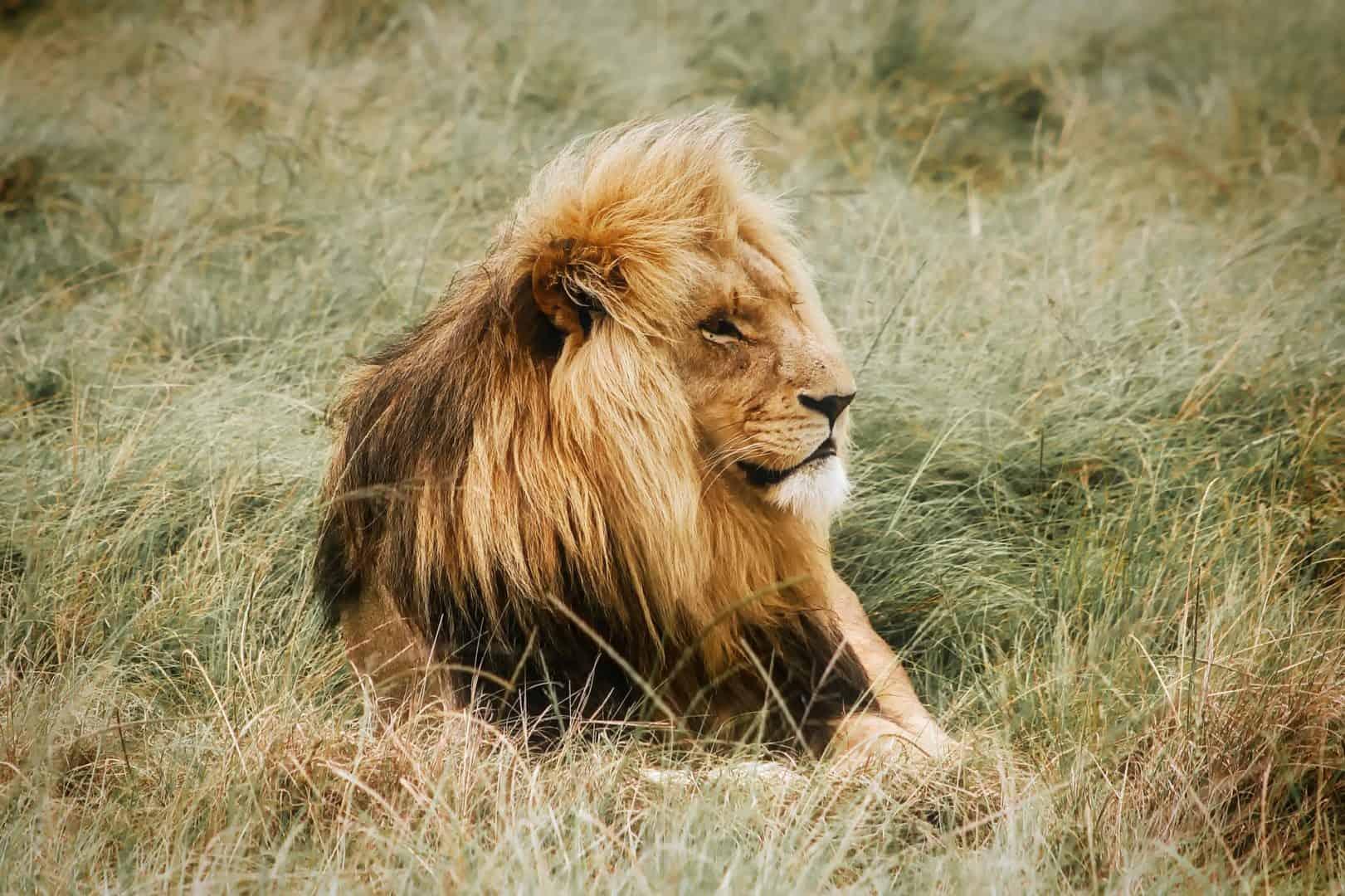 Kruger Day Tours