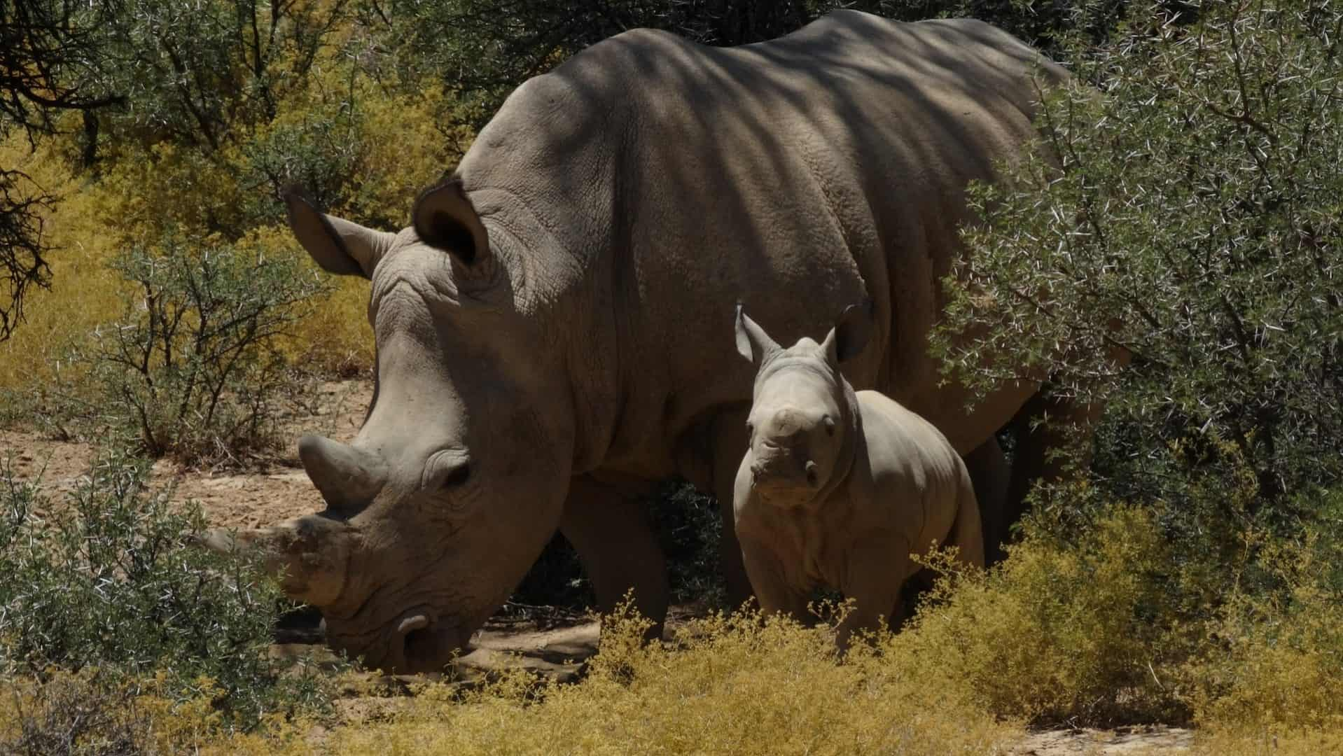 Rhino-Kruger-Park-Game-Drives