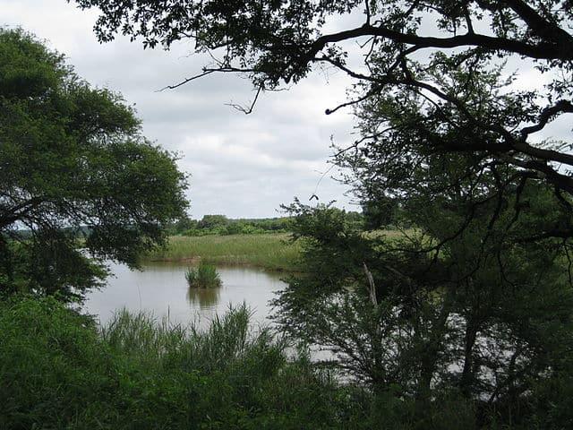 Sabie River kruger
