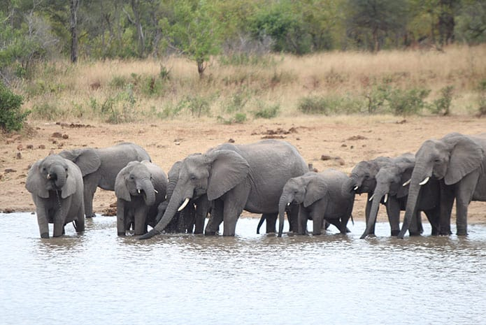 kruger park safaris elephants