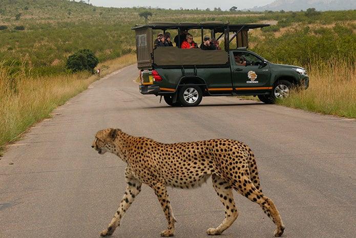 kruger park safaris leopard