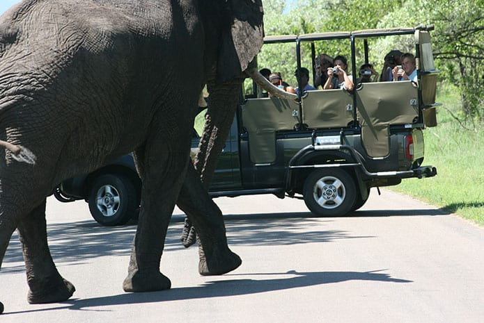 kruger park safaris open car elephant