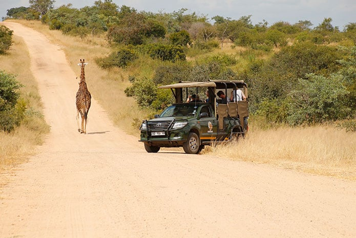 kruger park safaris open car giraffe
