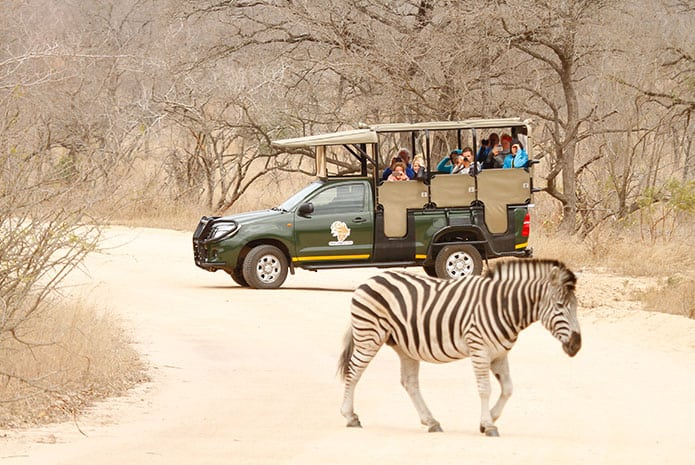 kruger park safaris open car zebra