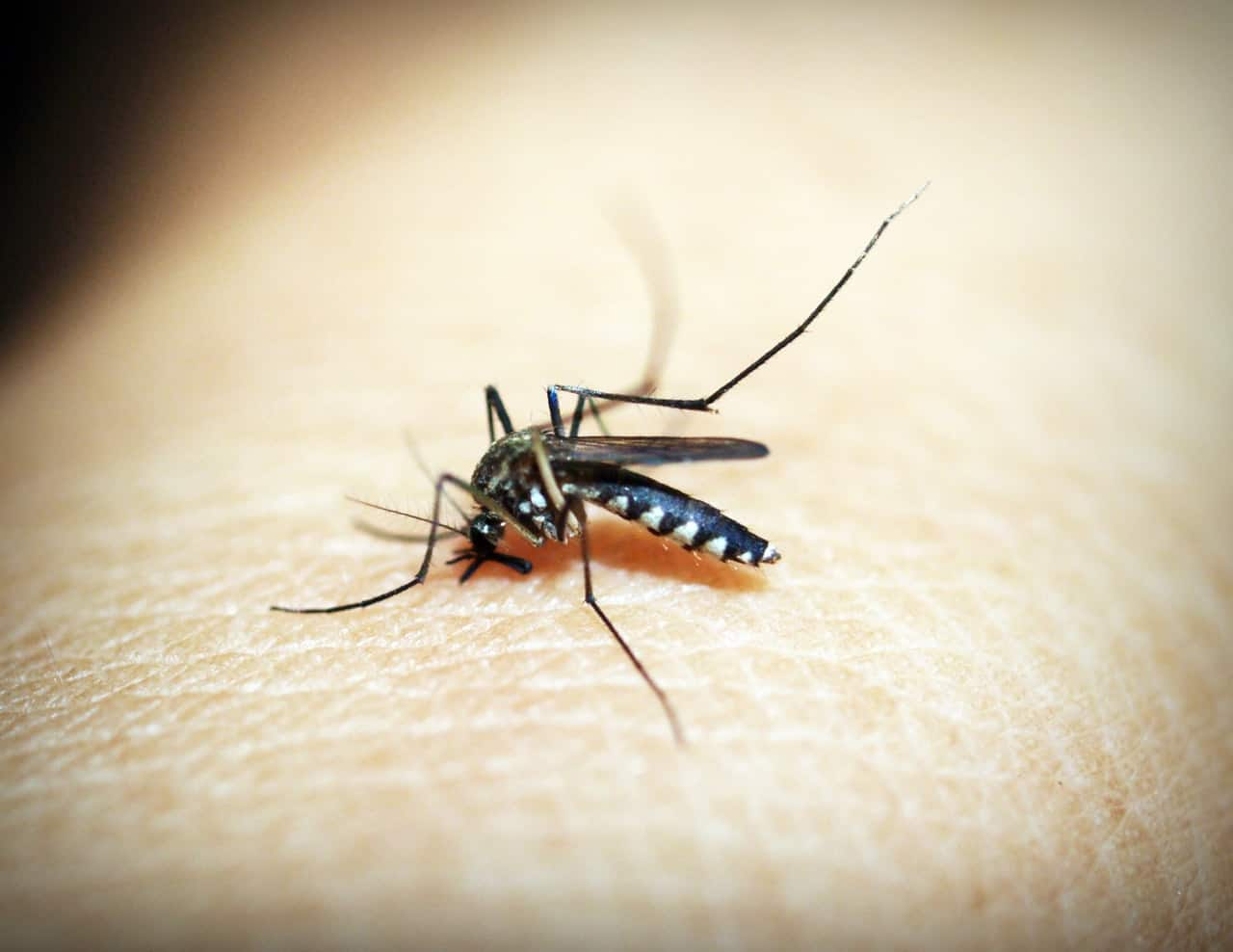 mosquito-kruger-park