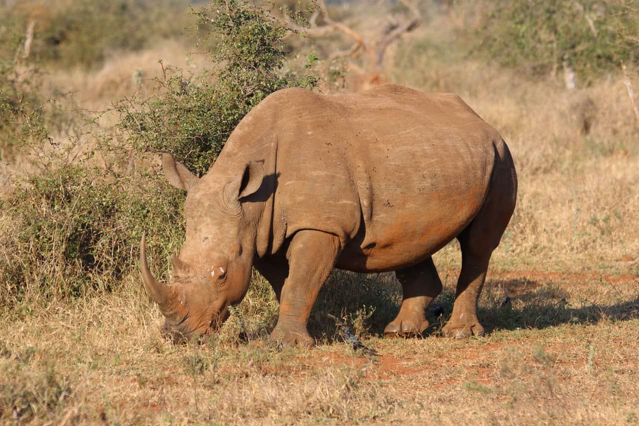 kurt safaris