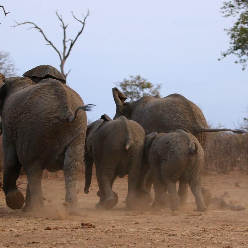 Safaris Transfers & Tours