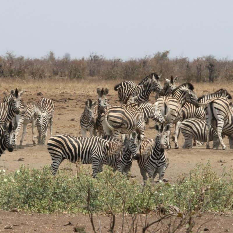 kruger park package deals