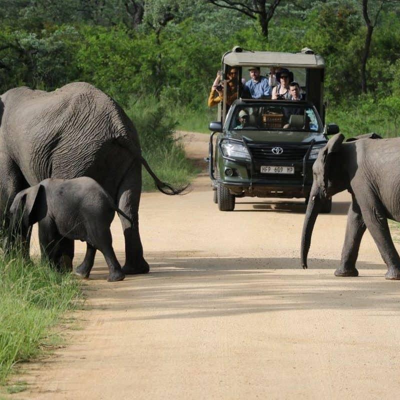 kruger park safari tour