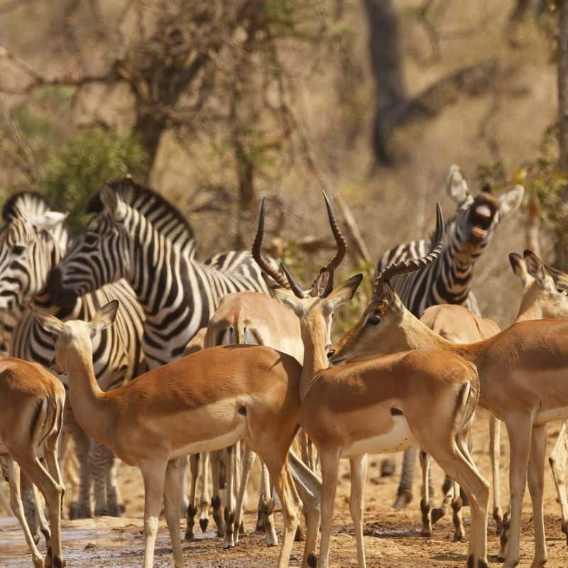 5 Day Kruger Park Big 5 Safari