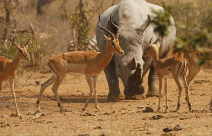 safari tour krüger nationalpark