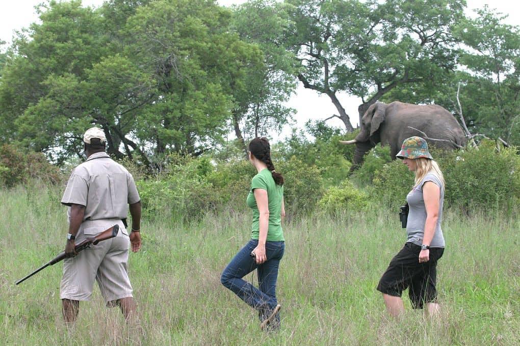 guided walks kruger national park