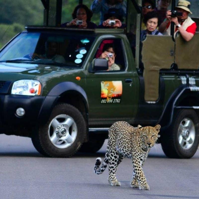 Kruger national park day safaris