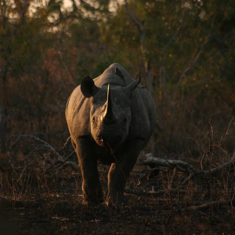 1 day safari kruger national park