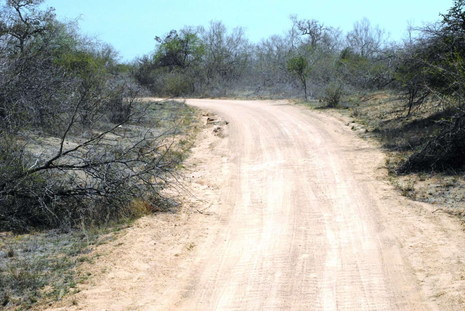 Kruger park day tour