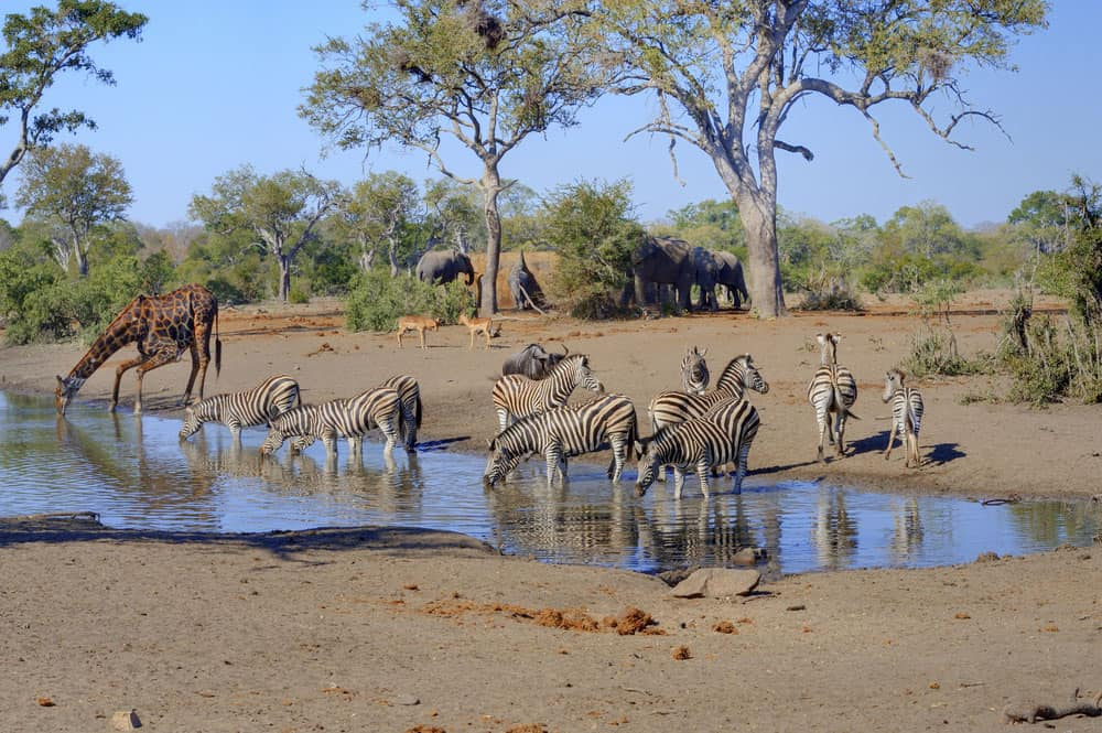 Kruger park safari waterholes